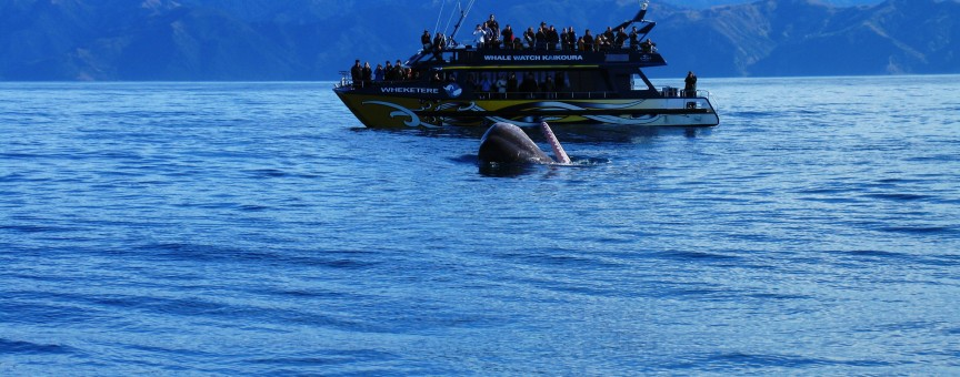 Kaikoura Whale Watch